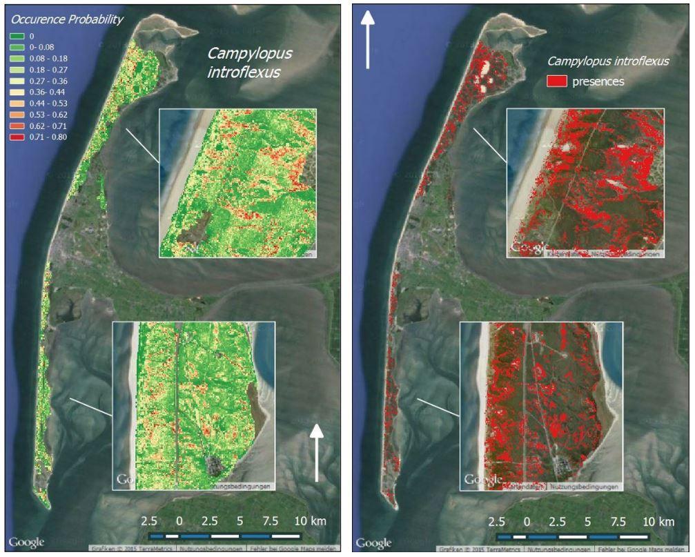 DIARS map Campylopus introflexus