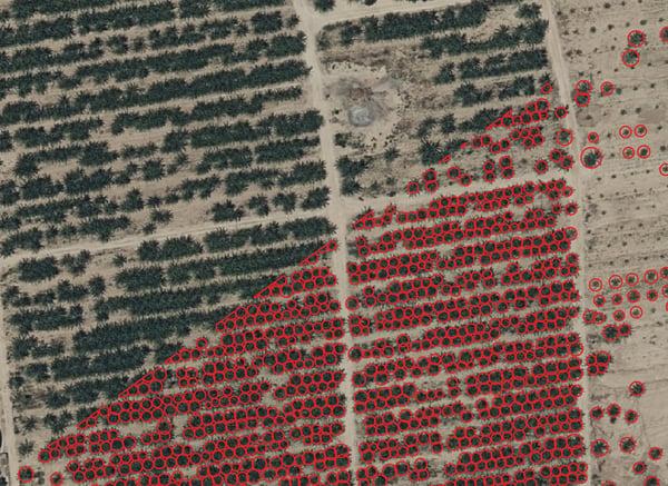Identificatie van palmbomen op luchtbeelden