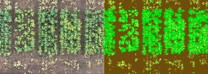 Pixel-based plant and flower classification - © VITO Remote Sensing