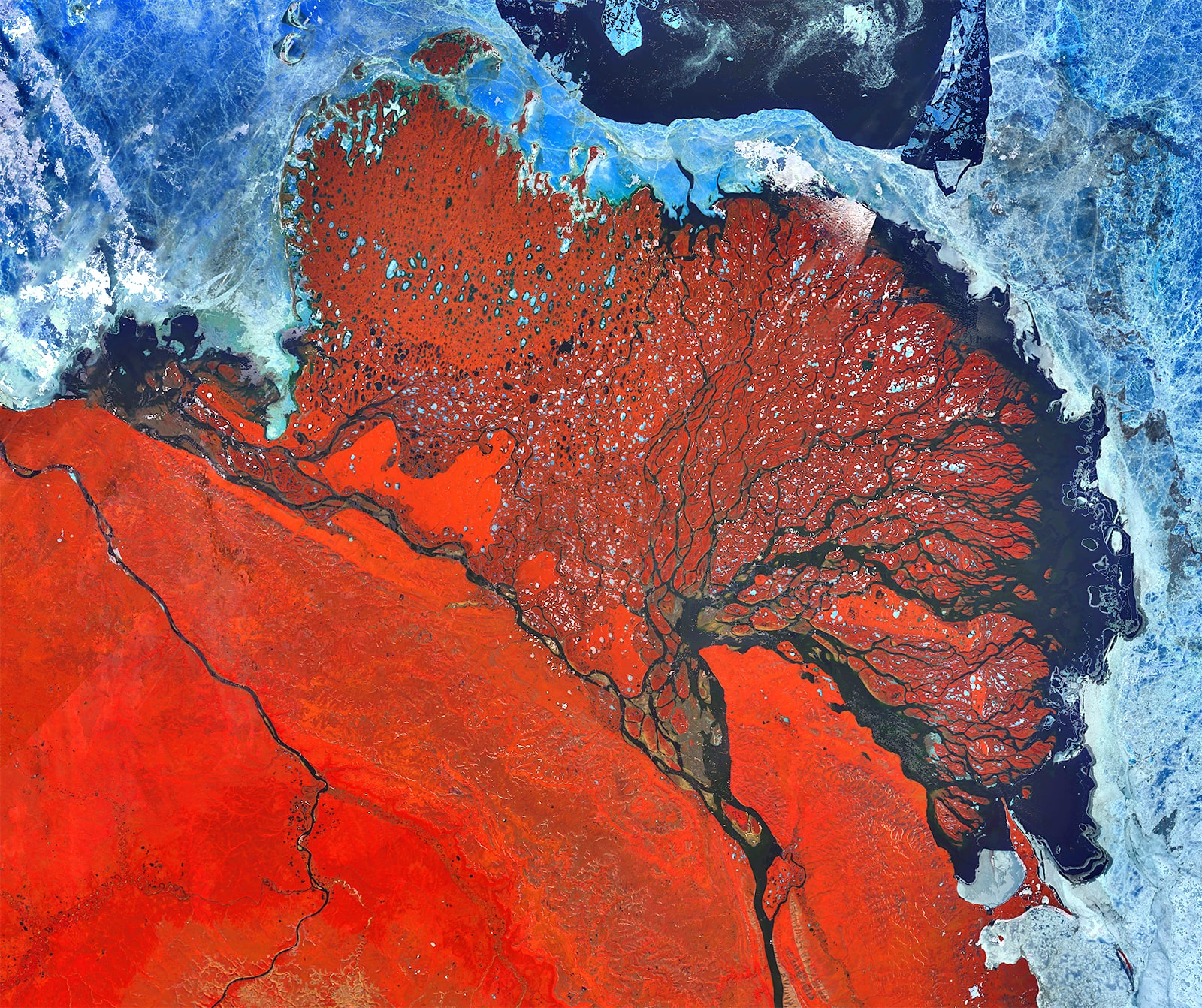 PROBA-V 100 m image of the Lena Delta, Russia