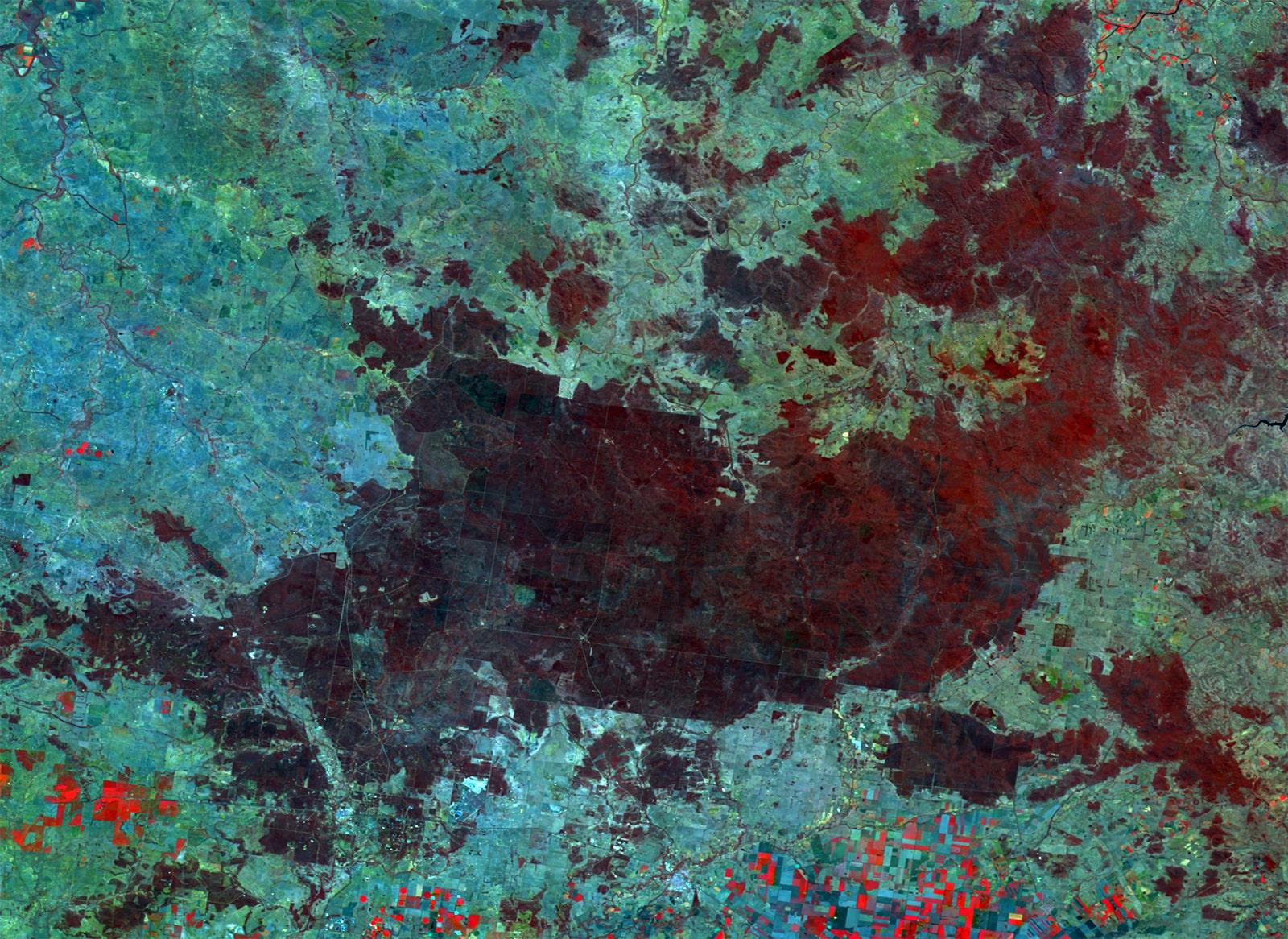 PROBA-V 100 m image of Barakula State Forest, Australia